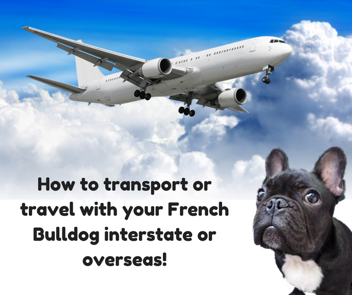 Is it safe for French Bulldogs to travel interstate or overseas by air?