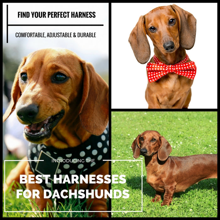 The Best Dachshund Harness (Top 5 Picks in 2018!)