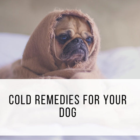 Cold Remedies for your dog