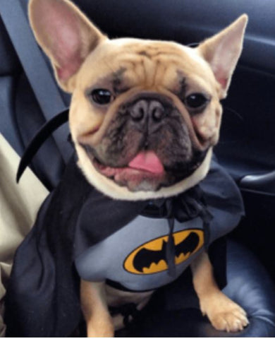 FFrench Bulldog Clothes Batman Outfit