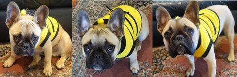 French Bulldog Clothes Bumble Bee Outfit