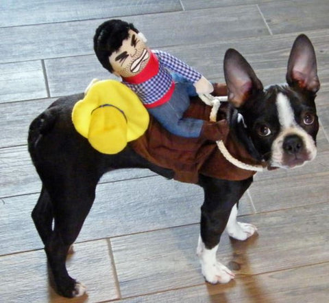 French Bulldog Clothes Cowboy Rider Outfit