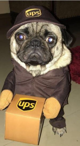 French Bulldog Clothes Delivery UPS Outfit