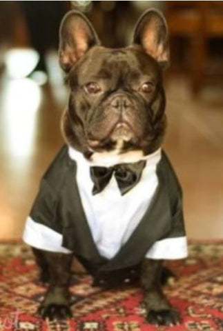 French Bulldog Clothes Jame Bond Costume