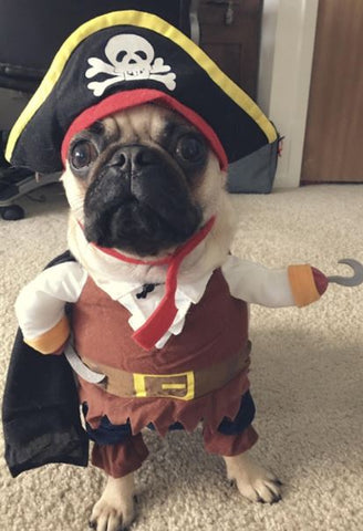 French Bulldog Clothes Pirate Outfit