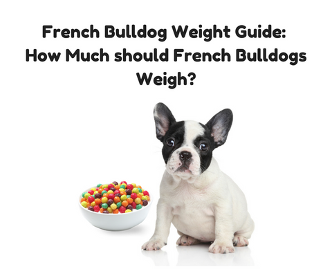 French Bulldog Weight Guide