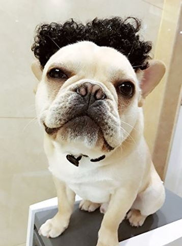 french bulldog wig