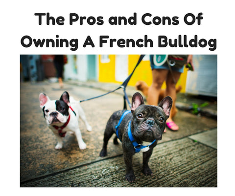 Pros And Cons Of French Bulldog