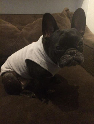 French Bulldog Vest