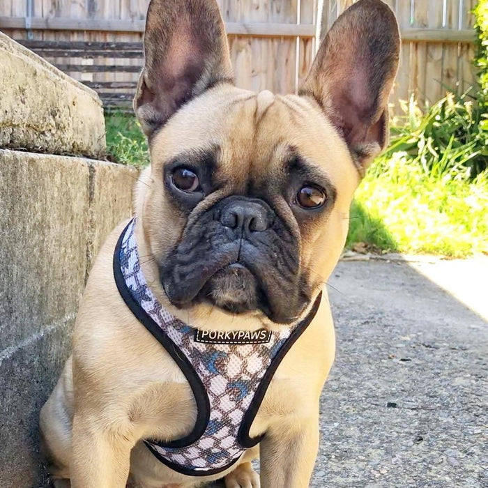 Reversible Dog Harness in 'Crabby'