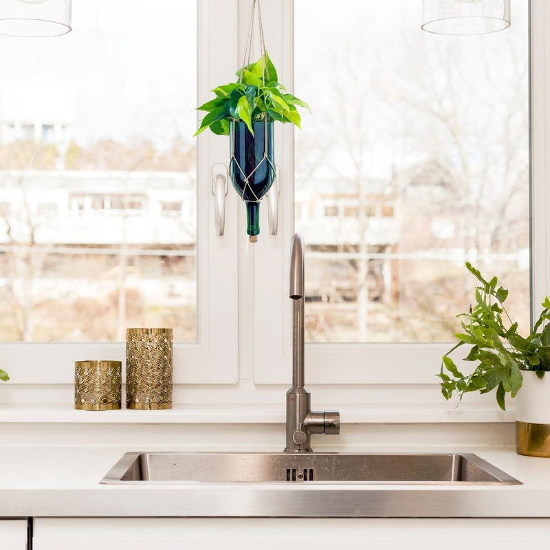 wine glass planter with Philodendron Houseplant