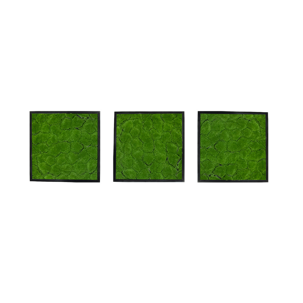 Artificial bun moss wall square art panels x 3