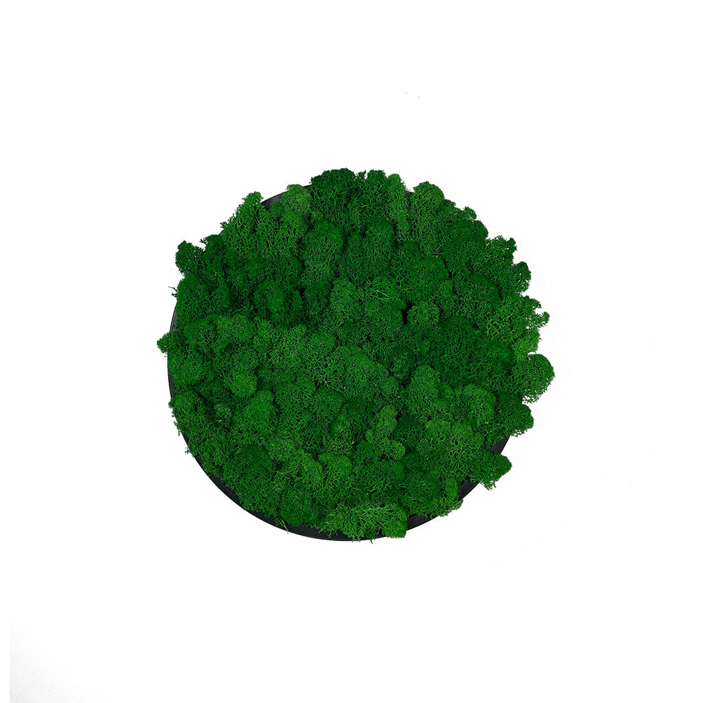 Preserved reindeer moss wall circular art panel MDF Black  - 30cm