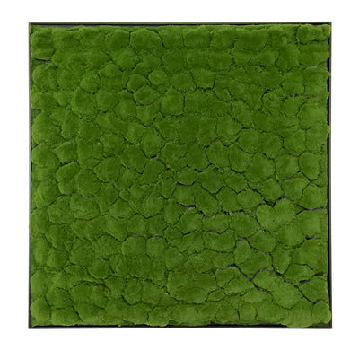 Framed Artificial green bun moss  panel 100x100 cm