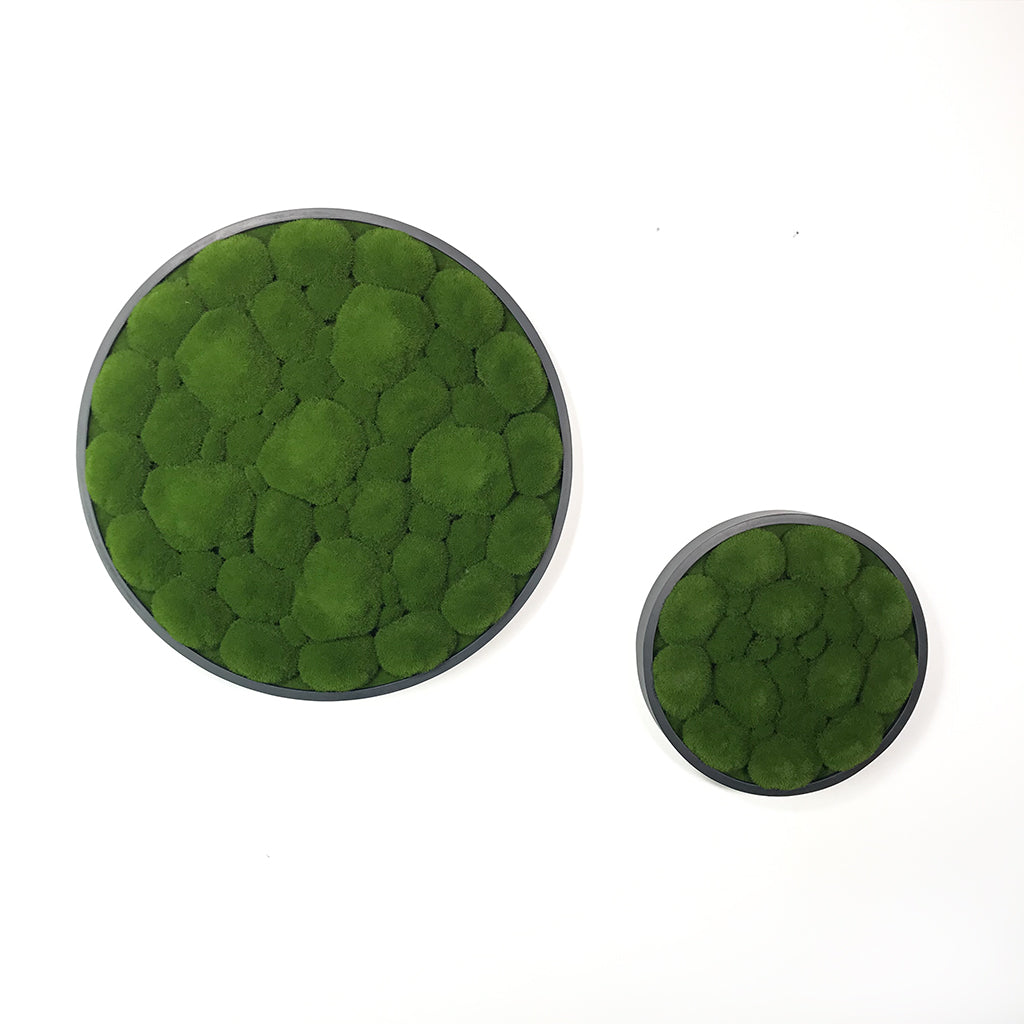 Artificial bun moss wall circular art panels - set of 2 - www.greenplantwalls.co.uk