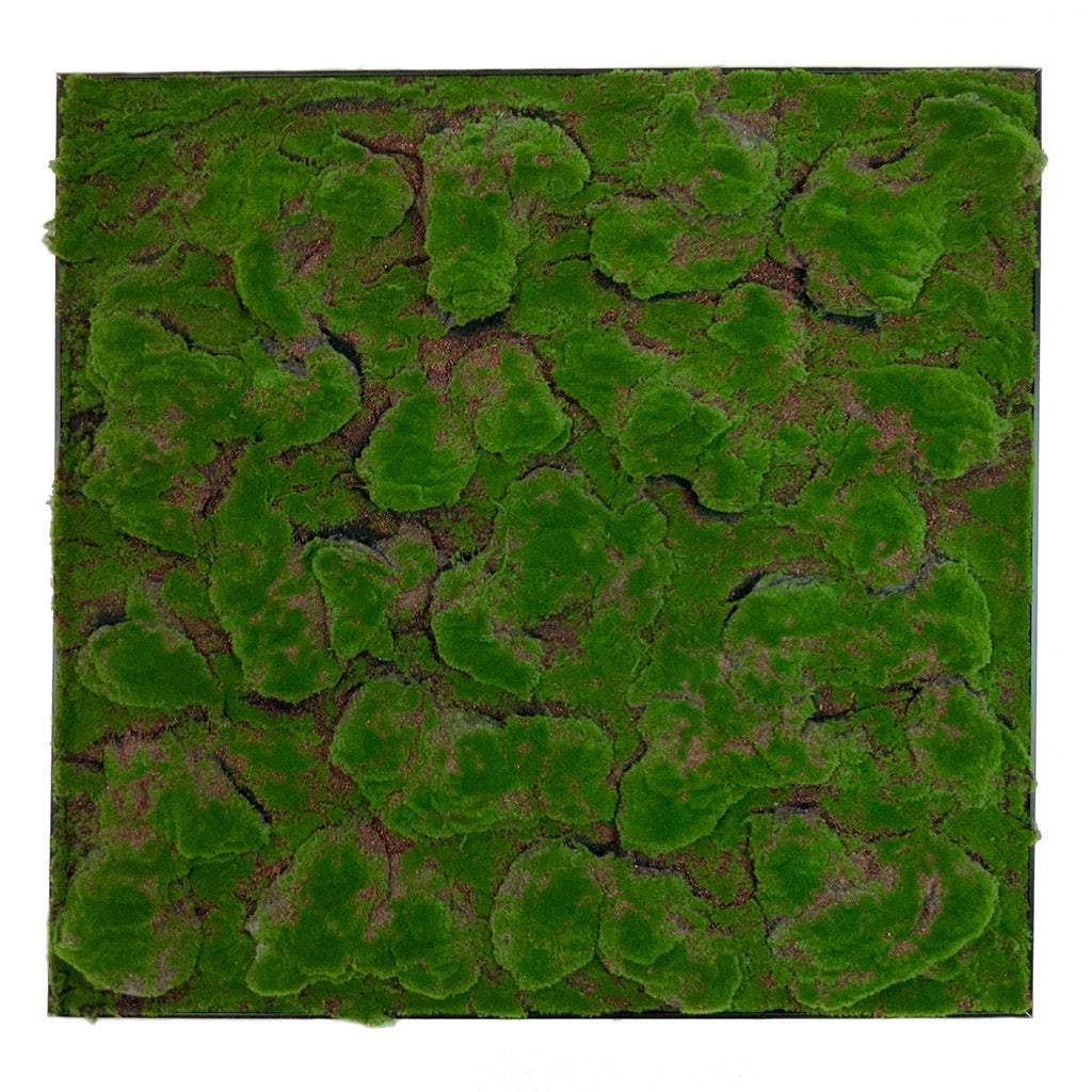 Framed Artificial green flat-lumpy moss art panel 100x100 cm - www.greenplantwalls.co.uk