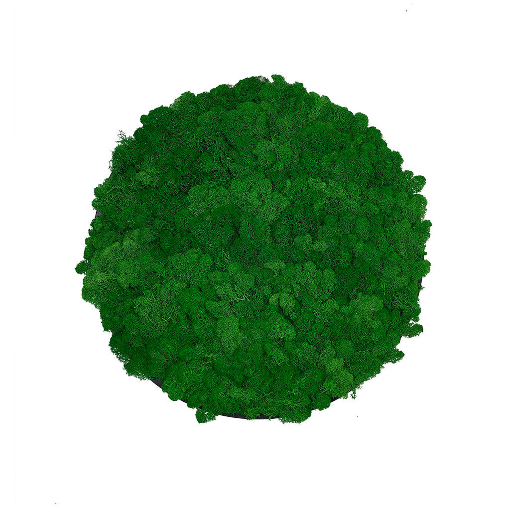 Preserved reindeer moss wall circular art panel MDF Black  - 50cm