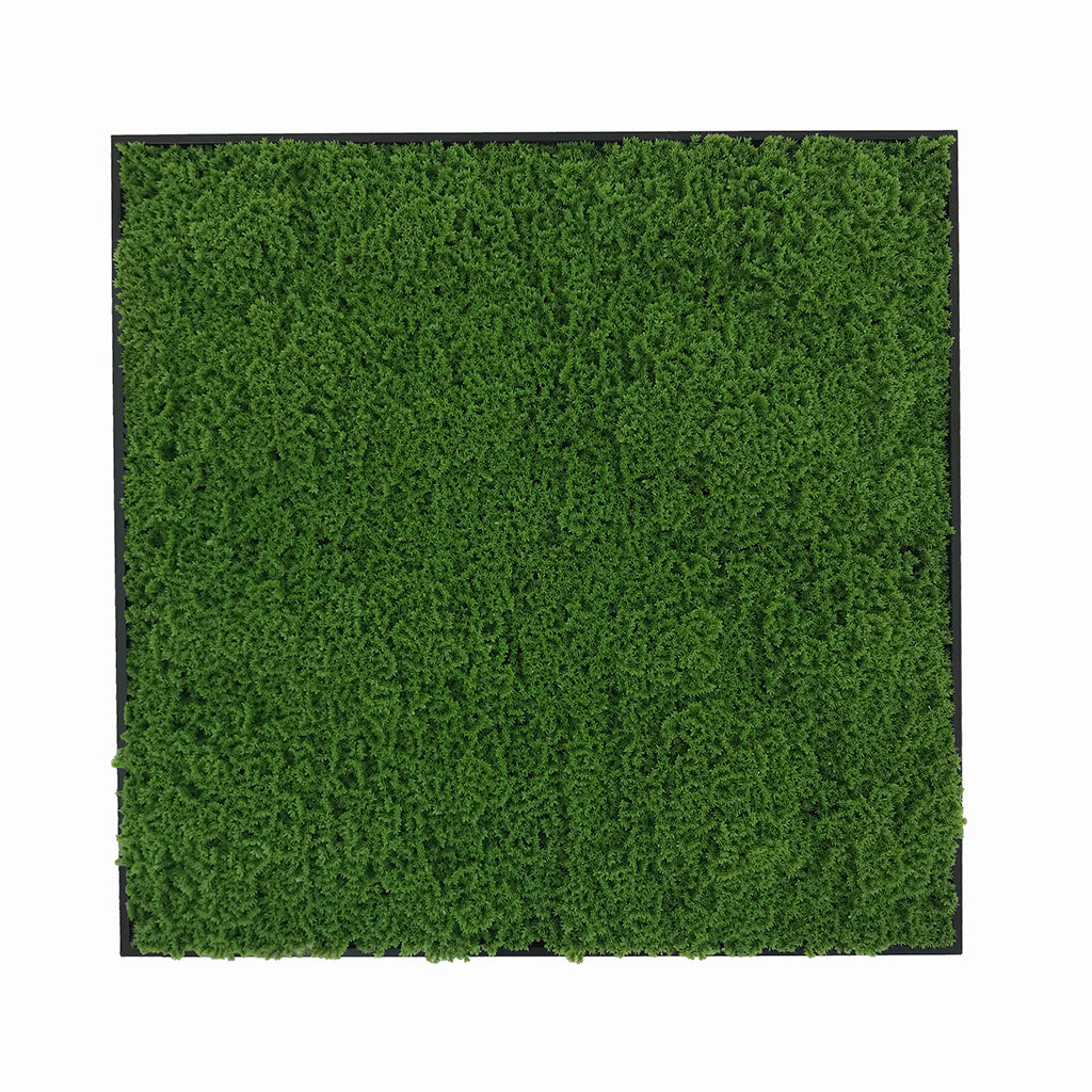 Artificial green lichen moss art panel 50x50 cm - framed