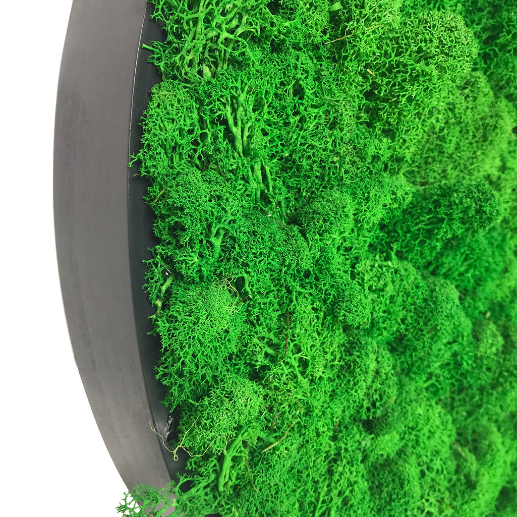 Preserved reindeer moss wall circular art panels - set of 2 - www.greenplantwalls.co.uk