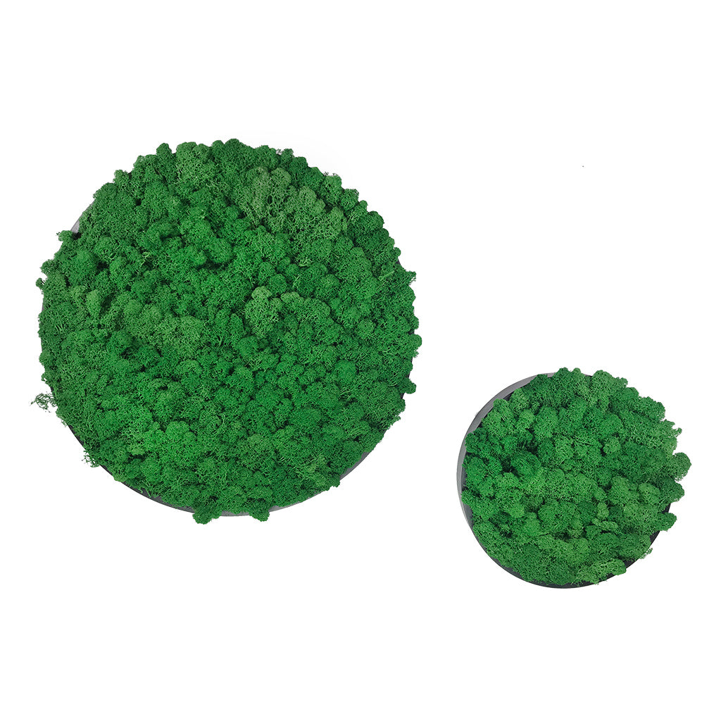 Preserved reindeer moss wall circular art panels MDF Black  - set of 2