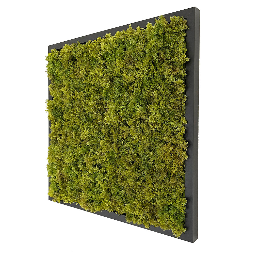 Artificial Reindeer  moss wall square art panel MDF Black - 50cm