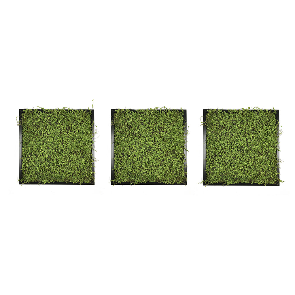 Artificial twig moss wall art panel x 3