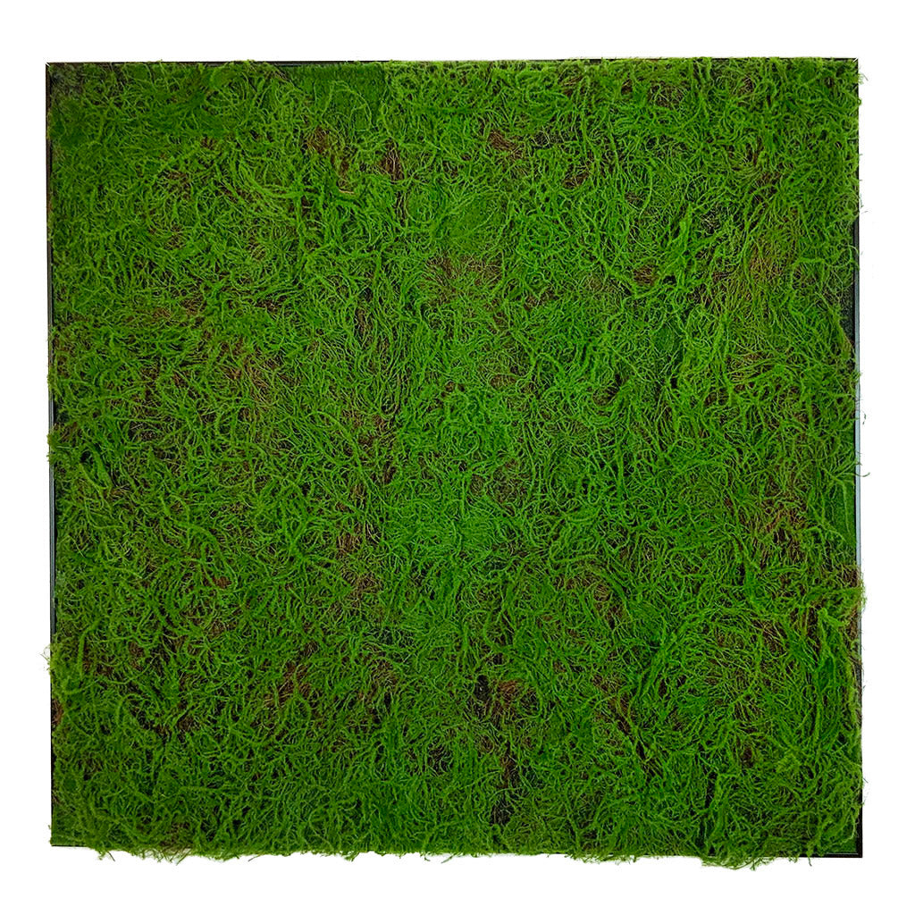 Framed Artificial green sphagnum moss art panel 100x100 cm - www.greenplantwalls.co.uk