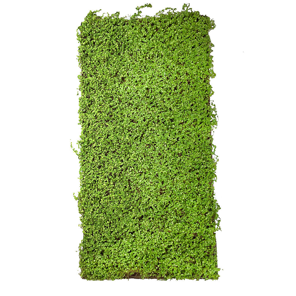 Artificial green  twig moss panel 100x50 cm - www.greenplantwalls.co.uk