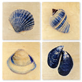 Seashell Coasters - From Original Painted Photography By Martha Everson - Set of 4 Wooden Coasters