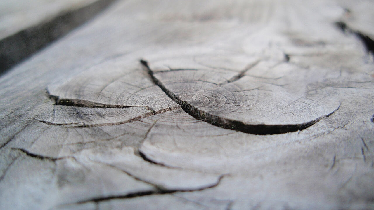 Dried and cracked wood