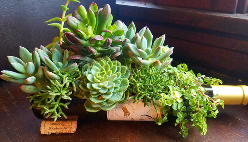 Succulent Wine Bottle Workshop