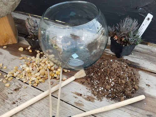 Terrarium Bowl Workshop