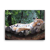 Canvas | Sleeping Tiger