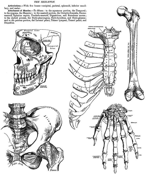 "Tim Holtz Cling Stamps 7""X8.5"", Anatomy Chart"