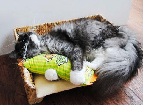Cat Pillow Colorful Toy