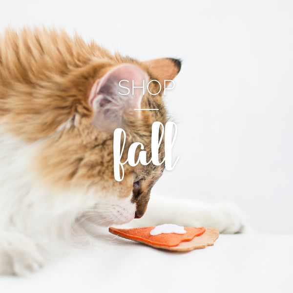 pumpkin pie cat toy