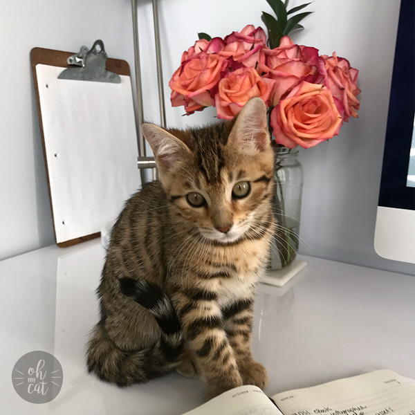kitten sitting on desk with flowers