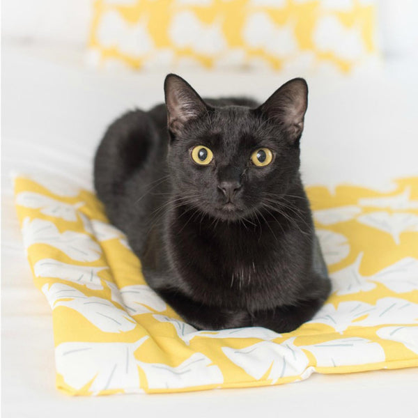 black cat on yellow cat mat