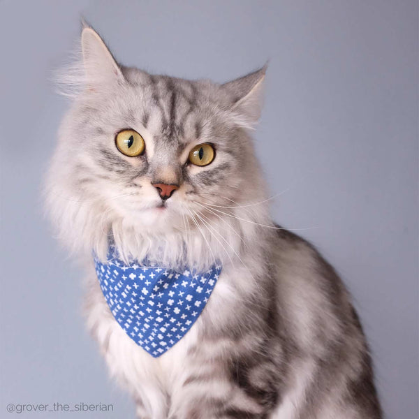 cat wearing blue bandana