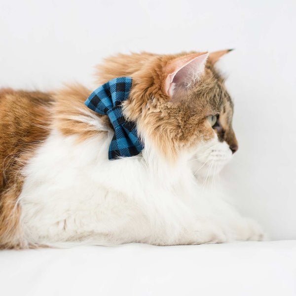 cat in blue plaid bow tie