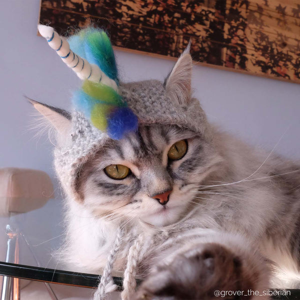 cat wearing unicorn hat