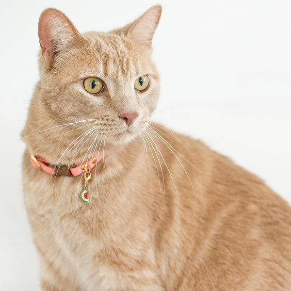orange tabby wearing pink collar and charm