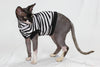 sphynx cat wearing shirt