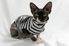sphynx cat wearing cat shirt
