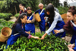 Growing a Small Tea Company The Grassroots Way