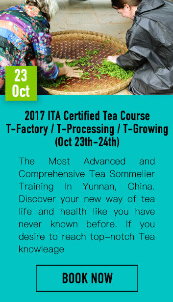 2017 ITA Certified Tea Course (T-Factory / T-Processing / T-Growing)