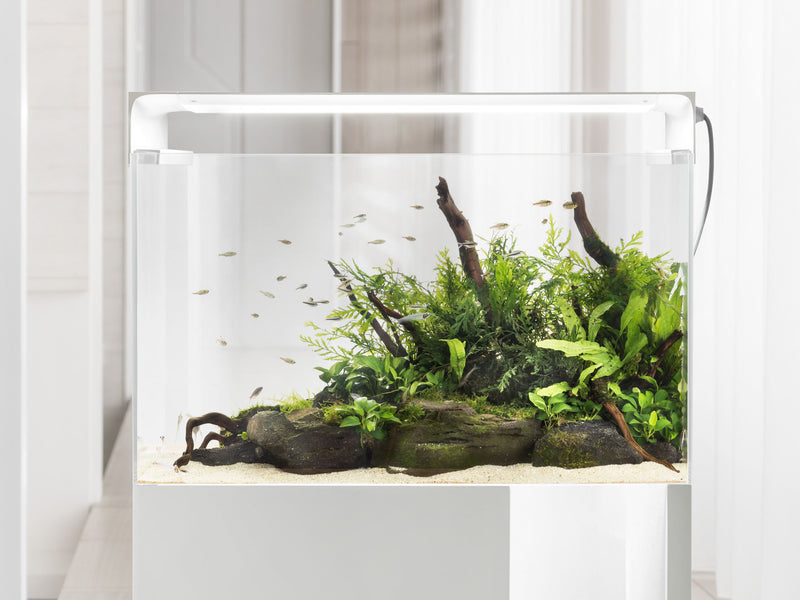 ONE FLAT ONE - The Smart Aquarium Lighting