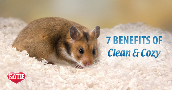 7 BENEITS OF CLEAN & COZY PET BEDDING