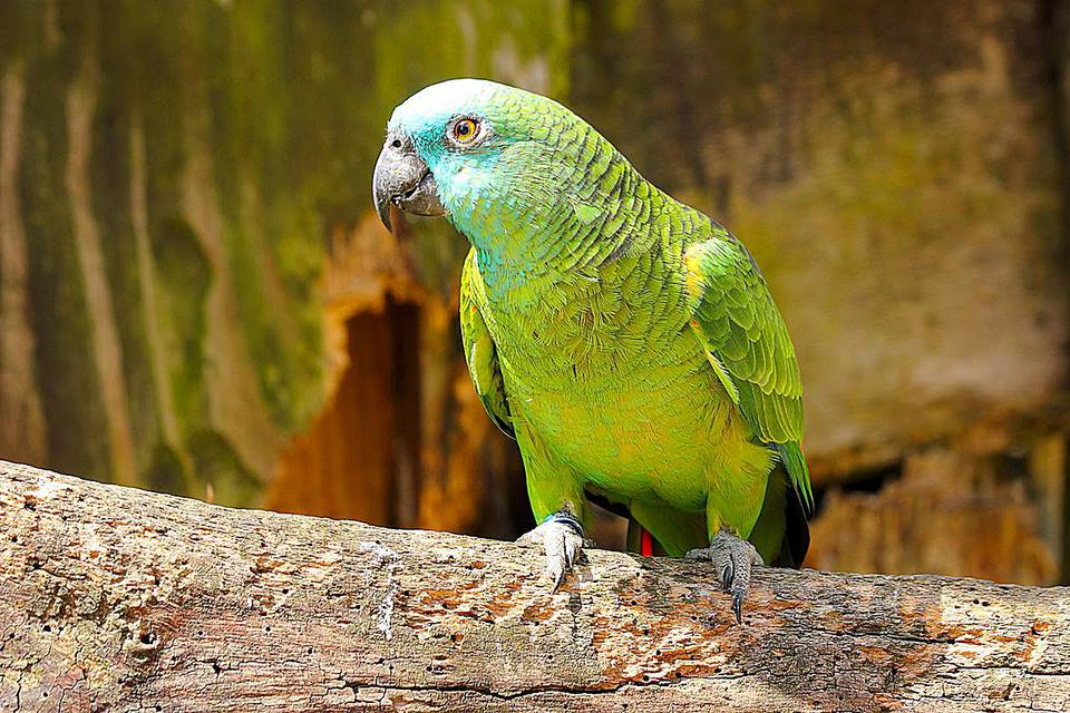 HOW LONG DO PARROTS AND OTHER BIRDS LIVE