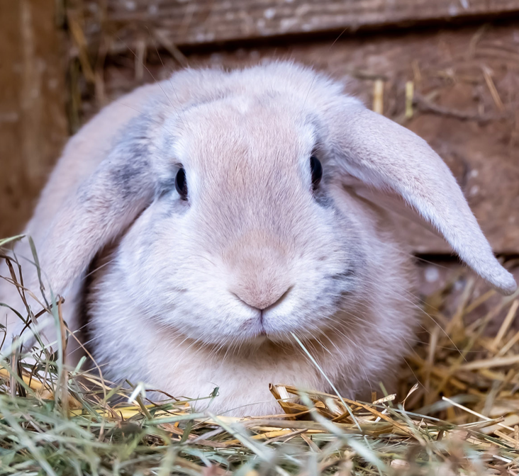 IS RABBIT POTTY TRAINING POSSIBLE? IF SO, HOW SHOULD I GO ABOUT IT?